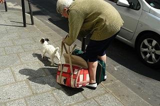 Afbeelding van een hondje wat uit een draagzak uitstapt
