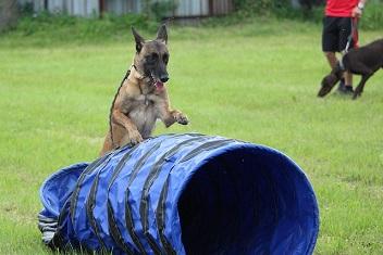 Afbeelding van een hond met een agility tunnel