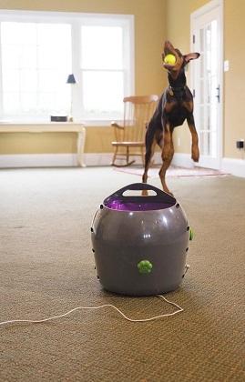 Afbeelding van de PetSafe automatische ballenwerper met een hond die de bal vangt