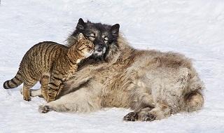 Afbeelding van hond die kat knuffelt, passen goed samen