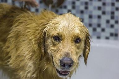 Afbeelding van een natte hond
