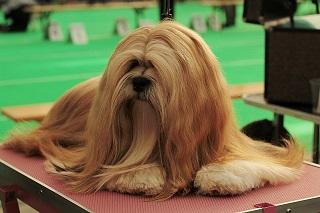Afbeelding van een mooie hond op een trimtafel