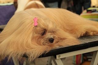 Afbeelding van een hond op een tafel