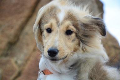 Afbeelding van een hond die door de wind wordt geblazen