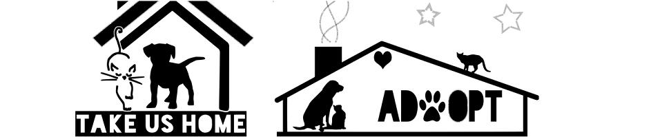 5 Goede Doelen voor Honden om te Steunen
