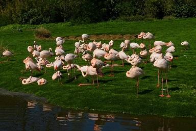 Afbeelding van flamingos in de dierentuin