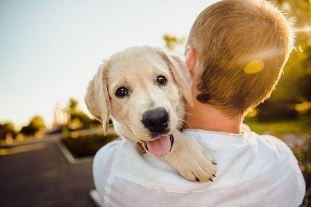 Afbeelding van een man die een hond meeneemt