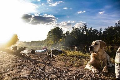 Afbeelding van een hond op glamping met zonsondergang