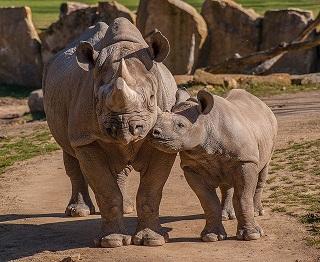 Afbeelding van neushoorns in de dierentuin