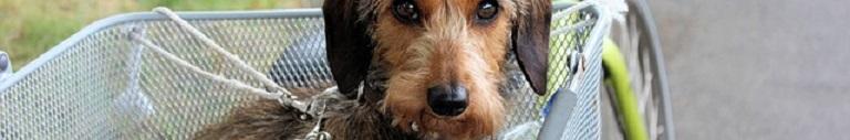 Fietsmand voor je Hond van 15 kg – Top 5 Reviews