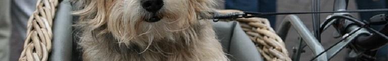 Hondenfietsmand Voorop: De 10 Beste Keuzes