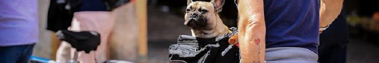 Basil Hondenfietsmand Top 3 Beste Aanraders