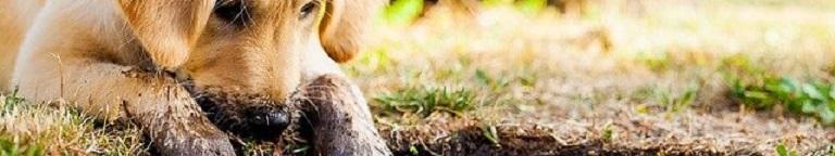 Topmast Puppyren Top 3 Stevige Aanraders