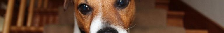 Top 4 – Het Beste Traphekje voor Honden