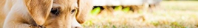 De Beste Opvouwbare Puppyren: Top 3